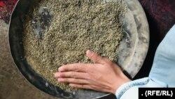 پرورش و فروش گیاههای طبی در ولایت هرات