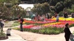 Biñlerce lâle: Nikita nebatat bağçasında çiçekler sergisi açıldı (video)