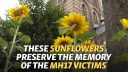 Sunflowers From Ukraine Memorialize Dutch MH17 Victims