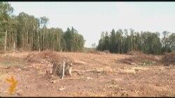 Раненый лес