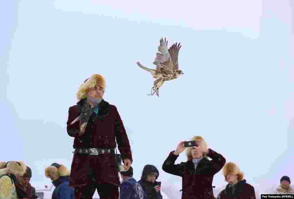 Една от задачите на ловните соколи е да хванат гълъб в полет.