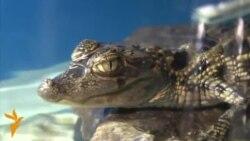 Тимсоҳ (крокодил) дар Душанбе