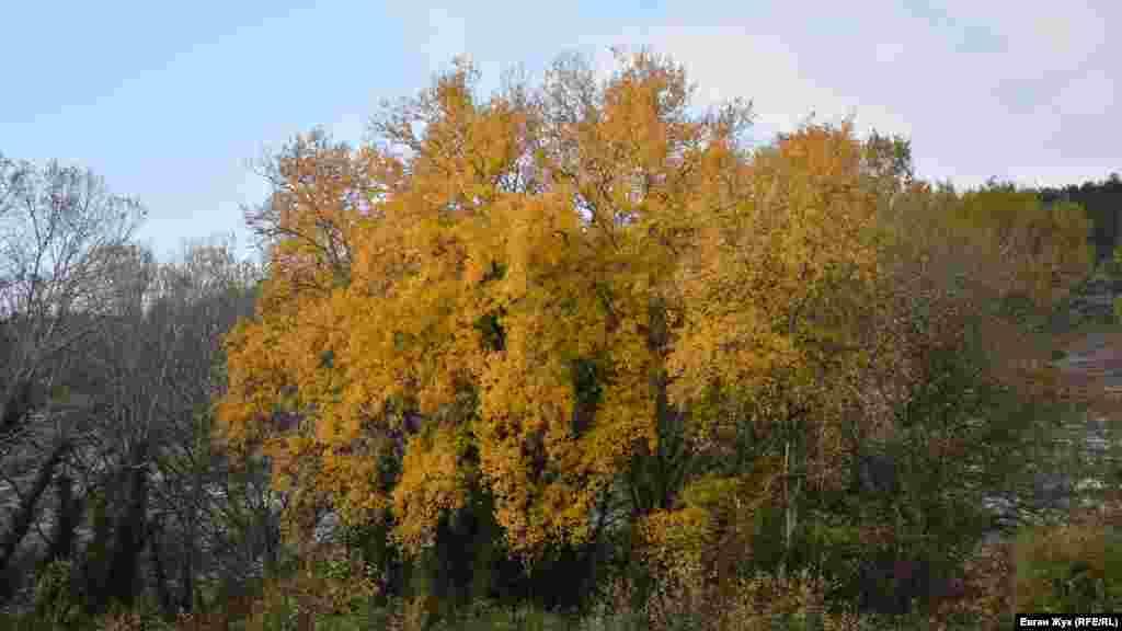 Жовті барви осені