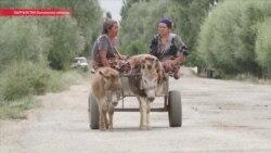 Рабочий на один день: зачем таджики в приграничных районах каждый день ездят в Кыргызстан