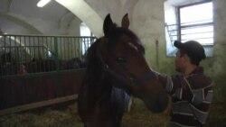 Chechen Strongman's Horses Find Greener Pastures In Czech Republic