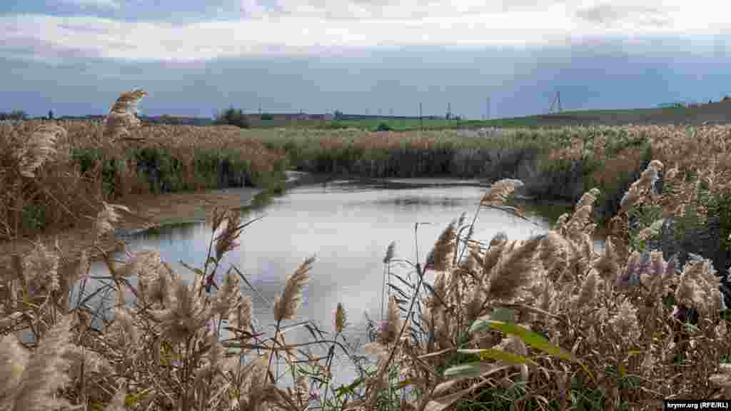 В некоторых местах в окружении густых зарослей тростника на дне балки сохранилась вода