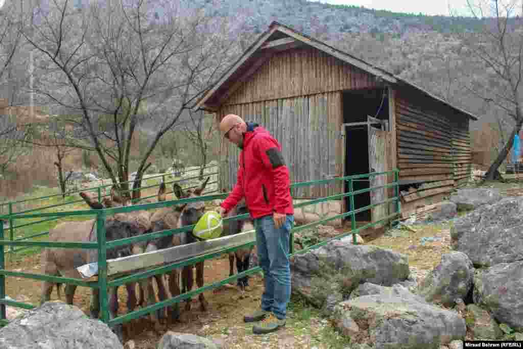 Uz pomoć UN-ovog programa za razvoj (UNDP), Eko centar Blagaj pokrenuo je i program zaštite hercegovačkog magarca, s ciljem očuvanja te autohtone vrste, čiji su primjerci do prije nekih 100 godina bili uobičajena pojava u Hercegovini, a danas se ta vrsta nalazi pred izumiranjem; na slici, voditelj Centra Adnan Đuliman hrani nekoliko hercegovačkih magaraca.