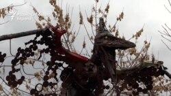 Праисториски железни птици го посетија Скопје