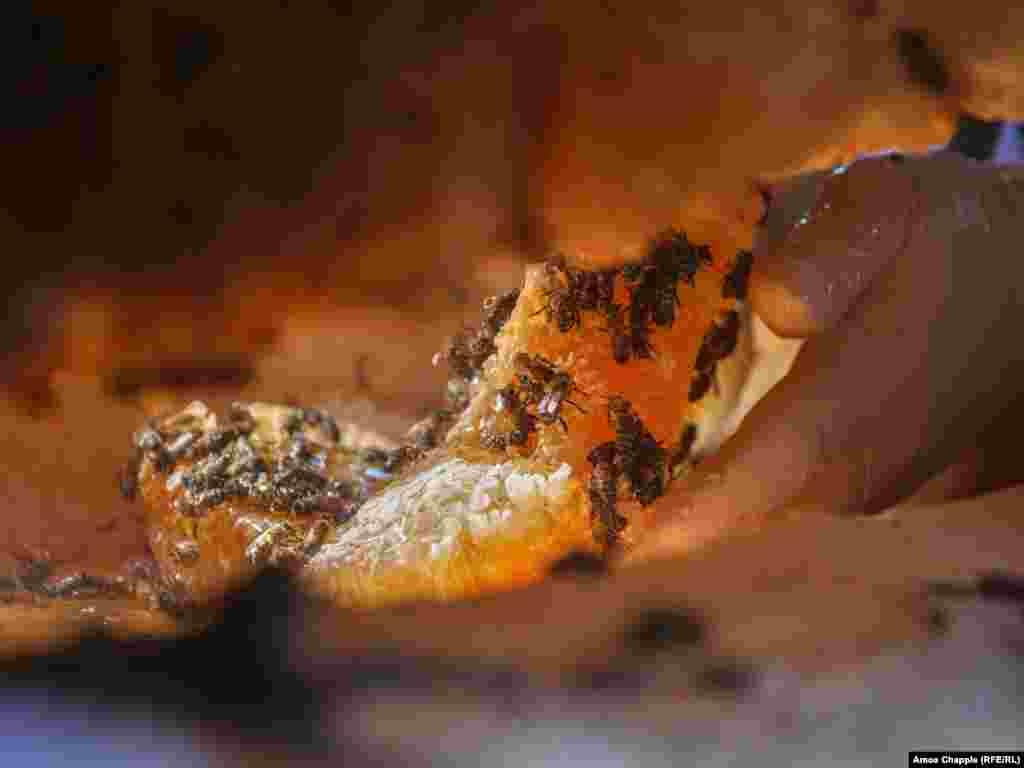 Чтобы собрать мед, Путкарадзе с помощью изогнутого лезвия (на первом фото) аккуратно срезает соты с крыши улья. Затем сладкое сокровище плюхается ему в руку, словно пропитанный сиропом блин