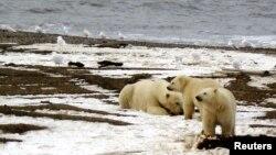 Rezervat prirode gdje žive polarni medvjedi zauzima područje od oko 80.000 četvornih metara.