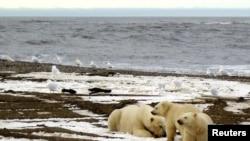 Национальный Арктический заповедник на Аляске. Администрация Байдена запретила добычу и разведку нефти на его территории