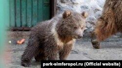 Медвежонок по кличке Глафира