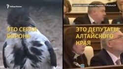Алтайские депутаты объявляют войну серым воронам