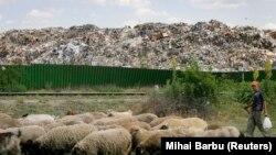 Овчар ги чува своите овци во близина на една од главните депонии во Букурешт