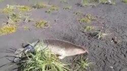 Ракетно гориво убива морски животни кај Камчатка
